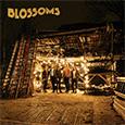 ブロッサムズ /「Blossoms」